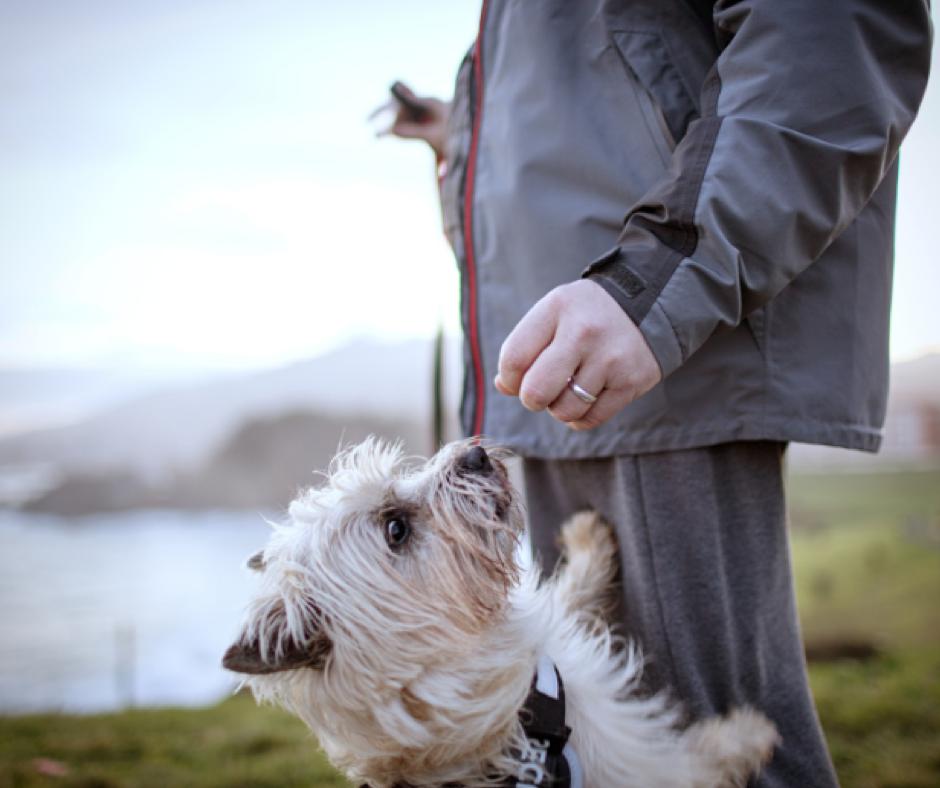 Señor paseando a un perro pequeño por el campo